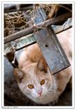 Backyard Cat_5659 b.jpg
