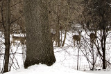 Deer in field -s-1-17-2011-.jpg