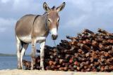 Scenes from Lamu Island, Kenya