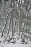 26 Snow Storm 5281
