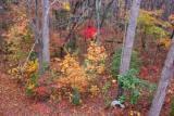 Fall woods 0280