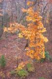 Fall woods 0282