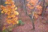 Fall woods 0287