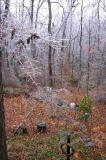 Ice storm 3493