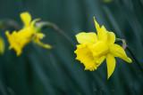 Narcisos I