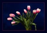 Tulipan VI (Color)