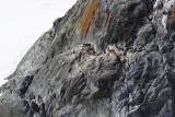 Mountain Climbing Penguins