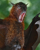 Going Batty with Voice lessons