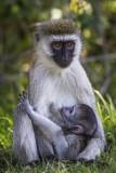Mom's little Monkey