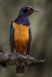 Sharp dressed Bird