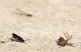 Wasp and an unfortunate spider