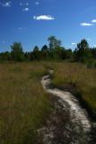 Pine Barrens savannah