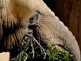 Elephant  Tree Branch.jpg