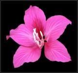 Pink Something