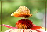 Macros of Butterflies, Bees, flowers, etc.