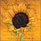 Sunflower On Texture