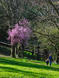 A touch of Spring in the Borghese Gardens .. R9441