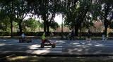 Borghese Gardens: Viale delle Magnolie .. R9444