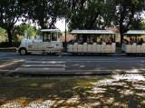 Borghese Gardens: Viale delle Magnolie .. R9449