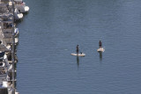 Indifferent Paddlers