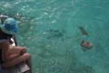 Kani Snorkeling