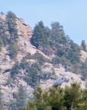 z P1070128 Great Blue Heron watches Lake Estes.jpg