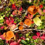 Mushrooms in context - IMG_1459
