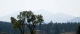 z IMG_2810 Longs Peak & Mt Meeker - from Olympus Lodge