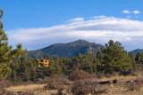 zP1030797 Mountain cabin above Estes Park.jpg