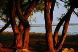 Habor Beach-New Providence Island