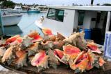 Potter's Cay- Fish Market