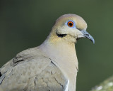 1310_doves