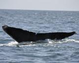 3005k_whales