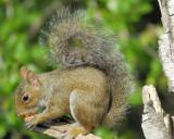 3005e_squirrels