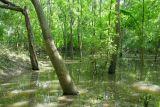 Lake Stoney Brook