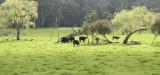 Yarra Valley Sunshine