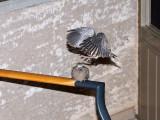 FWB 2925 Doves.jpg