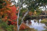 IMG_6885 Foliage.jpg