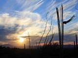 IMG_8239 Saguaro.jpg