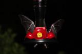 IMG_2149b Hybrid Batmobile.jpg