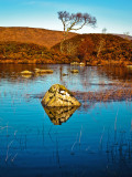 Loch Na Achlaise  Rock & Tree