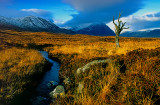 Lone Tree  - film + digital editing
