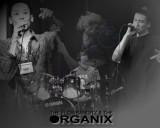 The Flowbandits & The Organix