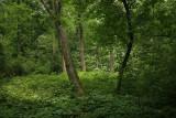 Arboretum: University of Wisconsin Madison