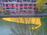 autumn_leaves_in_rotterdam