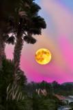 Harvest Moon Painted