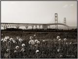 The Longest suspension bridge