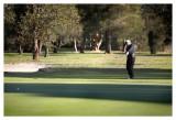 Golf_075.jpg