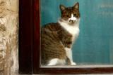 les chats de la vieille citée
