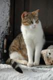 Cats of Folegandros - 1